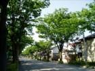 住宅街の街路樹