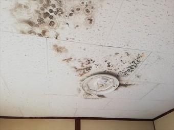 ベランダ下の室内の雨漏り状況