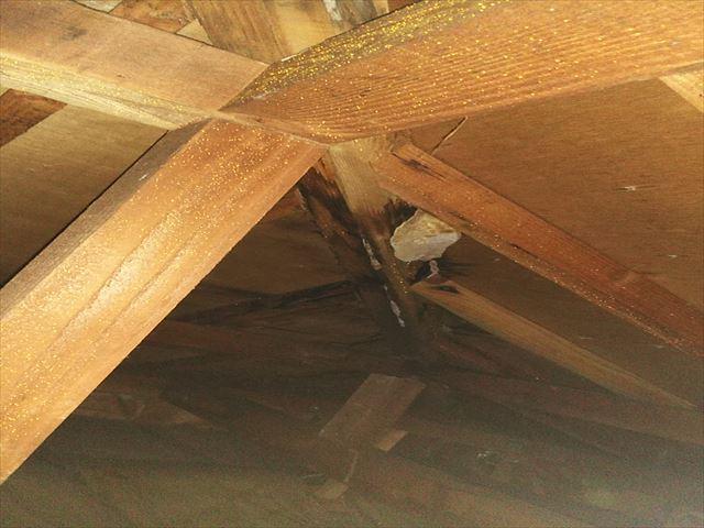 姫路市香寺町の小屋裏の白カビの写真