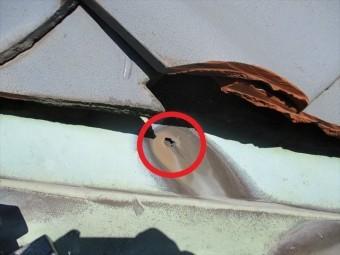たつの市の雨漏りの原因となった銅の谷板金の穴