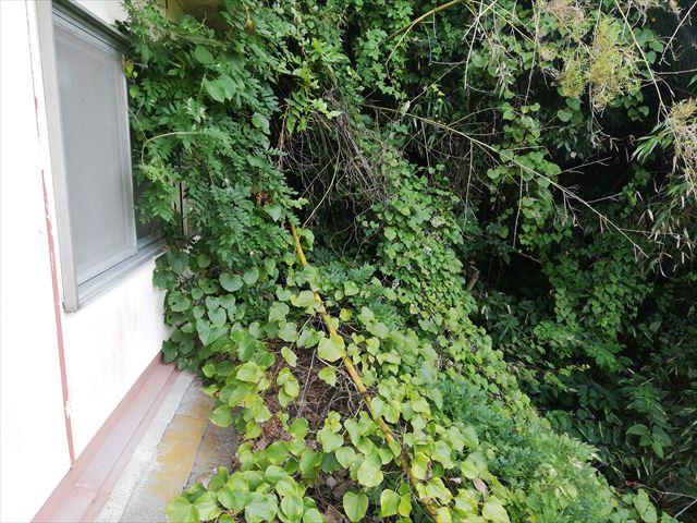 宍粟市のカバー工法の現場の屋根にかぶさる樹木