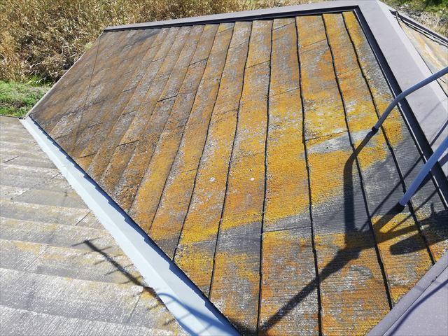 姫路市の無料点検のスレート屋根の苔