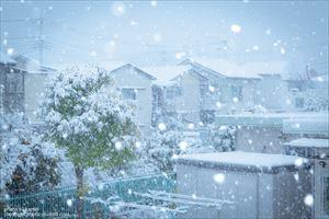 気が早いですが雪の話。